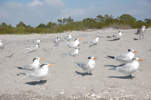 Snow birds on the beach