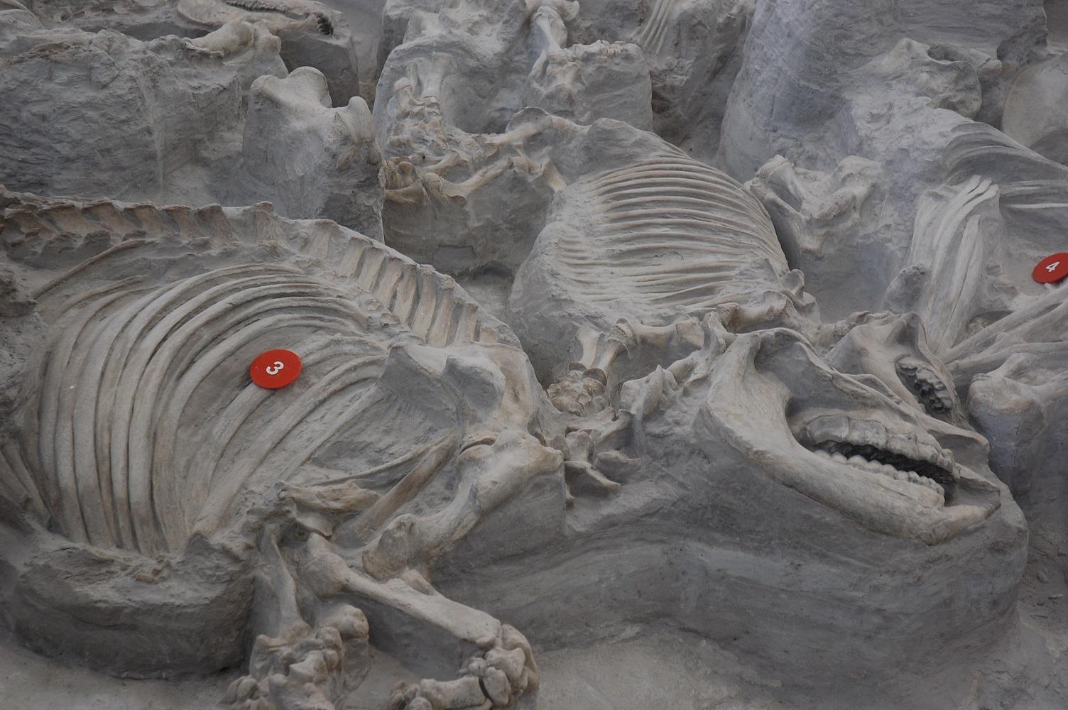 Ashfall Fossil Beds Hennacornoeli Days