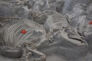 Ashfall Fossil Beds