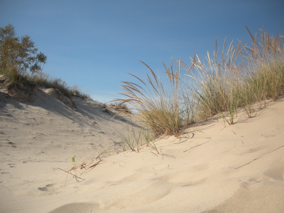 Sand dunes at Ludington State Park