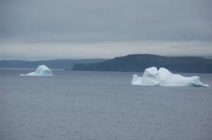 Icebergs off Goose Cove