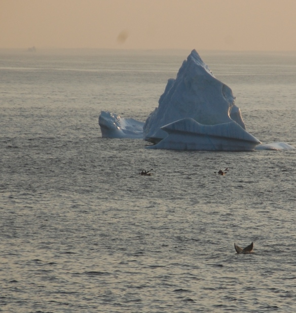Whales and 'bergs