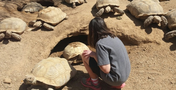 henna and the tortoises resized
